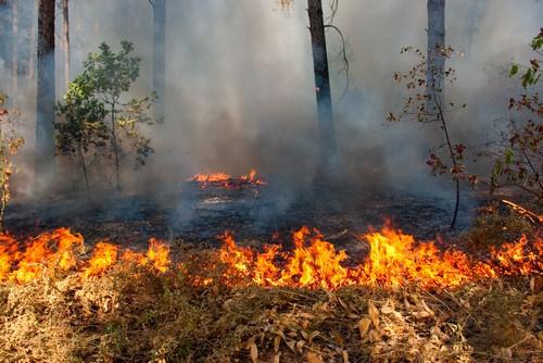 В Подмосковных лесах введен особый противопожарный режим